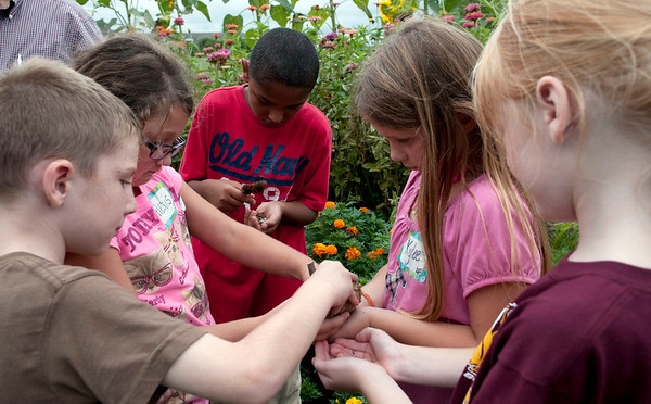 HALEY WARD | THE GOSHEN NEWS<br /> A group of second graders from Benton Elementary grab sunflower seeds to plant at home Thursday at the garden at Greencroft Communities. The students toured their butterfly garden and the other flowers for their science inquiry unit. The students also have plans to grow their own butterfly garden at their school.