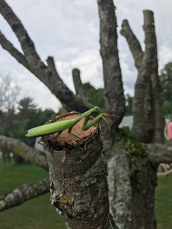 """Joanne Wyand writes: """"Taken by Gavin Lee Barber-Spoor, age 14, on Aug. 22 while doing yard work. Don't find many of these anymore."""""""