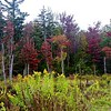 Richard Hoebel spotted his first fall colors in this Washington marsh, as seen in this photo he sent us Thursday.