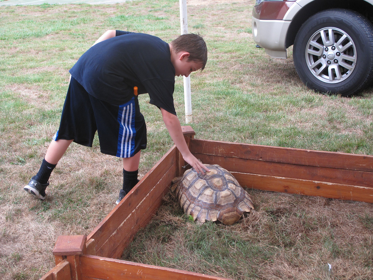 ELIZABETH DOBBINS / GAZETTE Spencer Marinuzzi, 8, of Seville pets a roughly ten year old sulcata tortoise brought to the Village of Seville Bicentennial Celebration by Our Zoo to You, a traveling petting zoo.