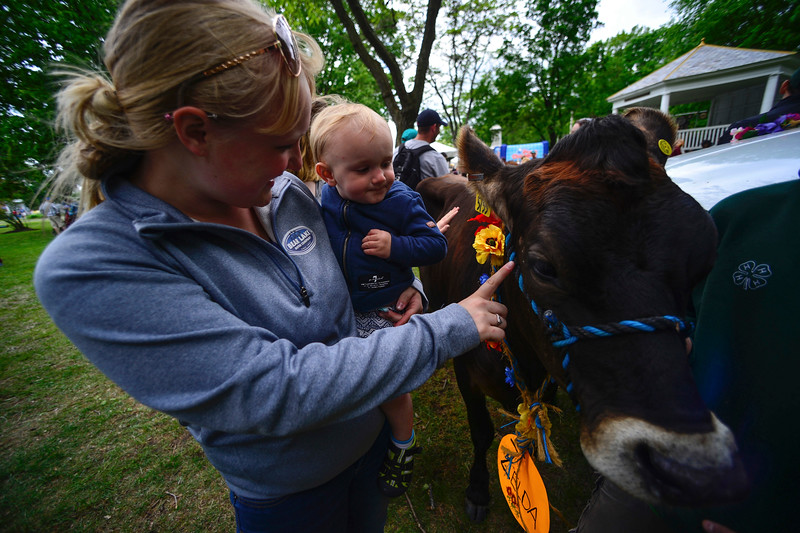 KRISTOPHER RADDER - BRATTLEBORO REFORMER<br /> Amanda Wood holds her one-year-old son Korbyn Dean while he pets a heifer at the Brattleboro Commons on Saturday, June 3, 2017.