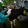 KRISTOPHER RADDER - BRATTLEBORO REFORMER<br /> People walk around the Strolling of the Heifers Slow Living Expo in Brattleboro, Vt., on Saturday, June 3, 2017.
