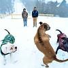 KRISTOPHER RADDER - BRATTLEBORO REFORMER <br /> Clover, Cummins and Whiskey play in the fresh snow at the Harris Hill Ski Jump on Wednesday, Feb. 7, 2018.