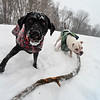 KRISTOPHER RADDER - BRATTLEBORO REFORMER <br /> Clover and Whiskey crew on a branch while snow falls.