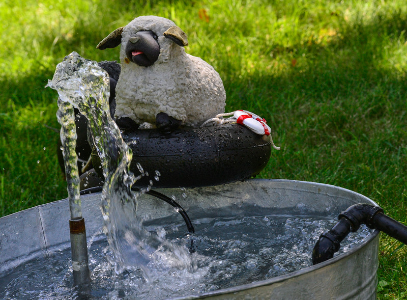 KRISTOPHER RADDER — BRATTLEBORO REFORMER<br /> The Love Sheep cool down during the warm summer days on the Sheepsoaker 5000 on Monday, July 15, 2019. Love Sheep is a social art project.