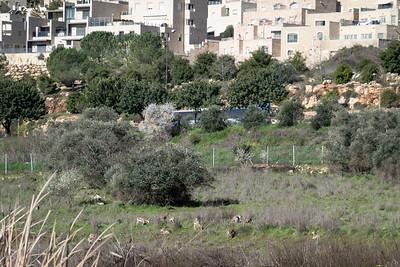 Spring in Israel
