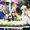 BEN GARVER — THE BERKSHIRE EAGLE<br /> Kayla and Carolyn Corby pick out plants for their gardens at Springside Park. The Springside Greenhouse Group Annual Mother's Day sale  runs from 9:00am-4:00pm May 11 and 12.