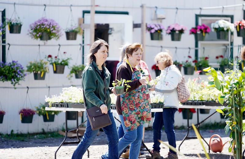 BEN GARVER — THE BERKSHIRE EAGLE<br /> The Springside Greenhouse Group Annual Mother's Day sale  runs from 9:00am-4:00pm May 11 and 12.