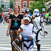 KRISTOPHER RADDER - BRATTLEBORO REFORMER<br /> Hailey Dow, 9, of Reading, Vt., dresses as a stormtrooper while walking with her heifer during the annual Strolling of the Heifers Parade, in Brattleboro, on Saturday, June 2, 2018.