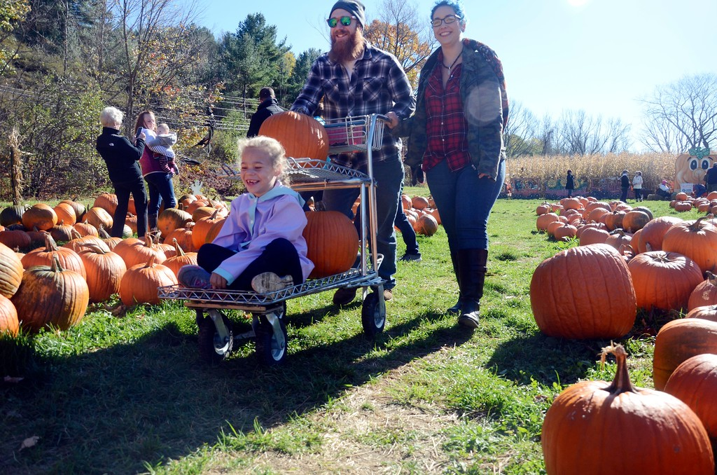 . After picking out pumpkins, six year old Holly Dawson of Lee rides on the cart pushed by her father at Whitney\'s Farm in Cheshire on Sunday afternoon.  Sunday, October 23, 2016 Photo by Caroline Bonnivier Snyder