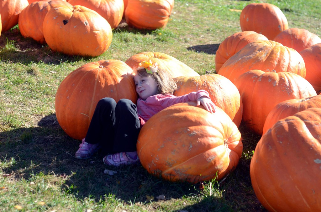 . Lily Genton, 6, of North Adams, lounges among the large pumpkins at Whitney\'s Farm in Cheshire.  Sunday October 23 2016 Photo by Caroline Bonnivier Snyder