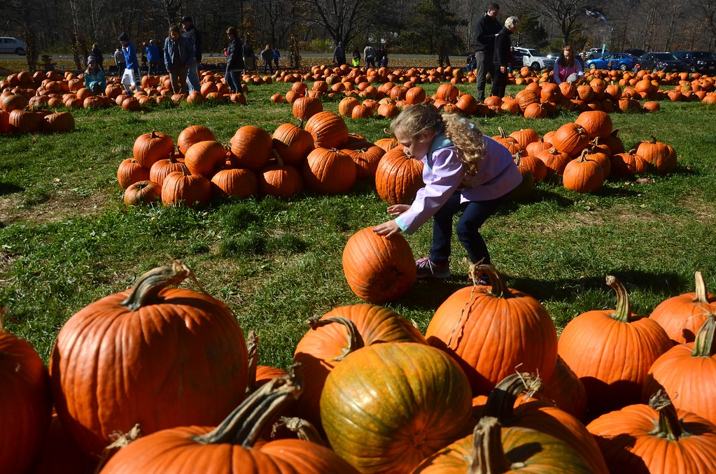 . Six year old Holly Dawson of Lee rolls the pumpkin of her choice to her cart show her father at Whitney\'s Farm in Cheshire on Sunday afternoon.  Sunday, October 23, 2016 Photo by Caroline Bonnivier Snyder