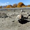 A dead fish lays in the sand on Tuesday, Oct. 23, at Teller Lake 5 in Boulder.<br />  Jeremy Papasso/ Camera