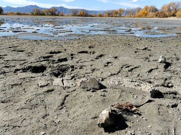A dead fish is lays on the sand on Tuesday, Oct. 23, at Teller Lake 5 in Boulder.<br />  Jeremy Papasso/ Camera