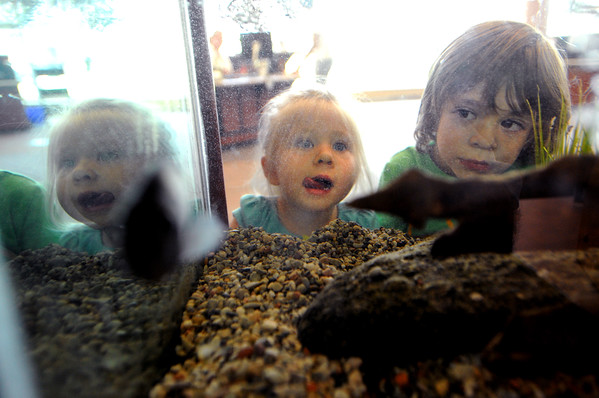 "Starla Taylor, 2, and her brother, River, 4, are amazed by the fish tank at the Boulder Public Library.<br /> For more photos of the library, go to  <a href=""http://www.dailycamera.com"">http://www.dailycamera.com</a>.<br /> Cliff Grassmick / April 21, 2012"
