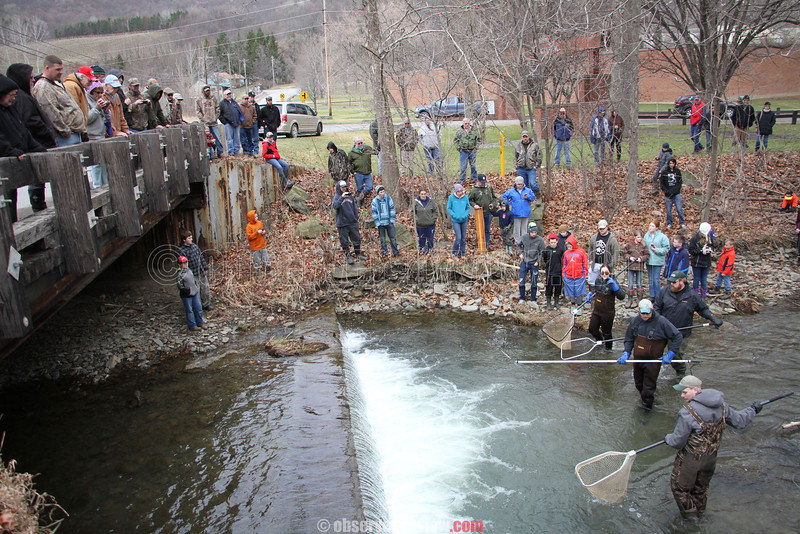 New York State Department of Environmental Conservation Trout Sample at Cold Brook, 3-25-16.