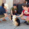 Theresa Setzer of Troy, pets Chancey, a three month old Pembroke Welsh Corgi, owned by Jon Petruttelli and Nicole Pulcino, of Albany as they pet Theresa's  a six year old Pembroke Welsh Katie at The Ruck Saturday, August 24, 2013 in Troy, N.Y., for Pints for Paws. The event was Pints 4 Paws to benefit Mohawk Hudson Humane Society. (J.S.CARRAS/THE RECORD)