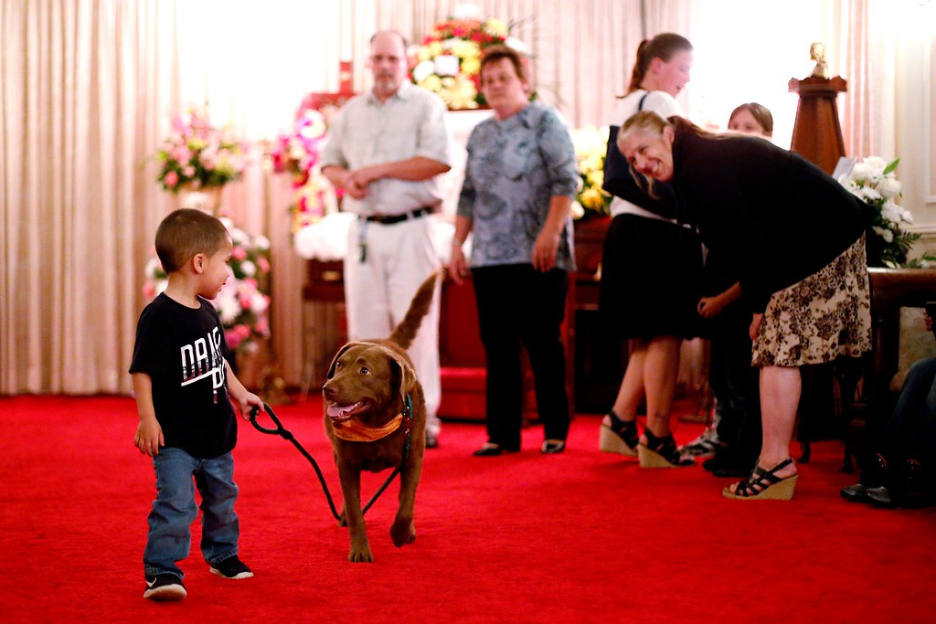 . Keyonei Dickerson, 3, takes the reins with 2-year-old Chesapeake Bay retriever Greyce at his great-grandmother\'s wake at Dwyer Funeral Home in Pittsfield. Greyce and her handler Jody Tierney visit the funeral home for free to provide an element of extra support for grieving family and friends of the deceased. Friday, October 21, 2016. Stephanie Zollshan � The Berkshire Eagle | photos.berkshireeagle.com