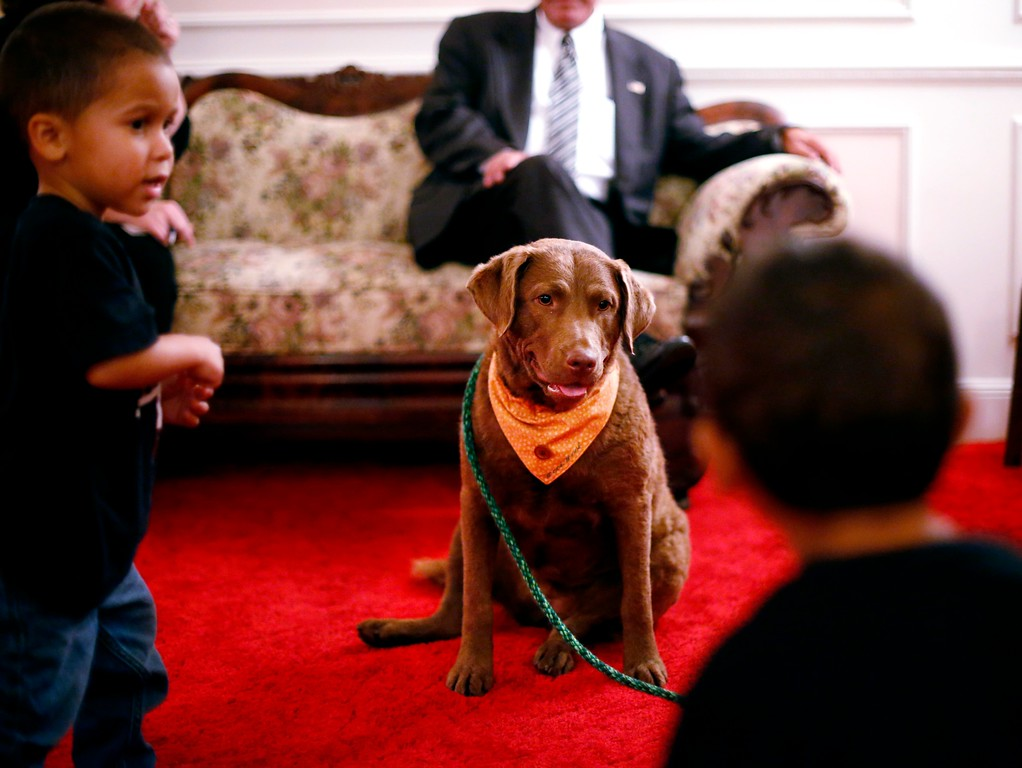 . Greyce, a 2-year-old Chesapeake Bay retriever and her handler Jody Tierney visit Dwyer Funeral Home for free to provide an element of extra support for grieving family and friends of the deceased. Friday, October 21, 2016. Stephanie Zollshan � The Berkshire Eagle | photos.berkshireeagle.com