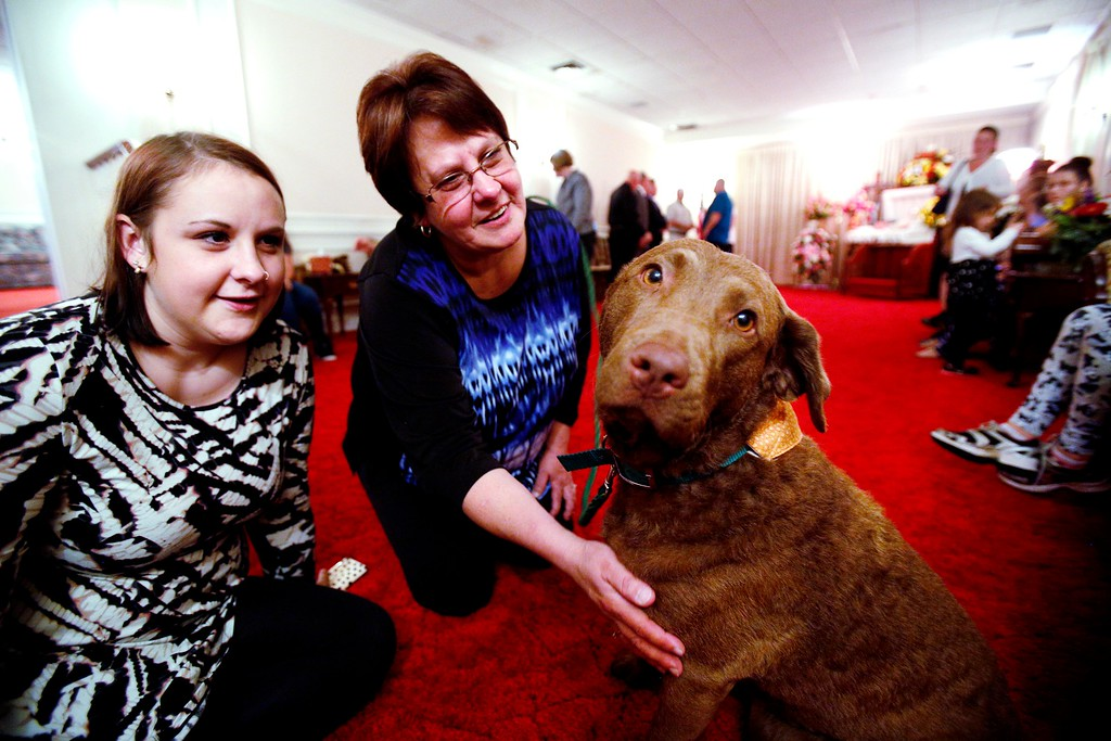 . Marie VanBramer, right, and her daughter Meaghan find solace in Greyce, a 2-year-old Chesapeake Bay retriever, at the wake of their mother-in law and grandmother, respectively, at Dwyer Funeral Home in Pittsfield. Greyce and her handler Jody Tierney visit the funeral home for free to provide an element of extra support for grieving family and friends of the deceased. Friday, October 21, 2016. Stephanie Zollshan � The Berkshire Eagle | photos.berkshireeagle.com
