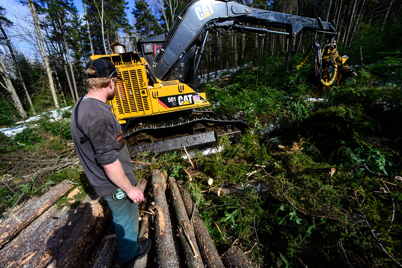 KRISTOPHER RADDER - BRATTLEBORO REFORMER<br /> Logan Sears, a harvester operator at Longview Forrest, cuts down trees while a group of people participate in a tour of an active timber harvest at Molly Stark State Park on Friday, Feb. 24, which was presented by Windham Regional Woodlands Association and Hogback Mountain Conservation Association.