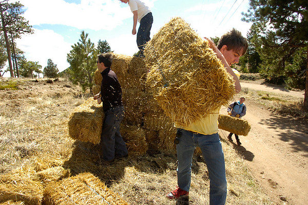 """Jeffrey Harvey, a student at the Watershed School, carries straw bales to be placed on top of reseeded areas as part of  a 3 day project by the school to reseed areas of the Fourmile Fire burn area in the Sugarloaf Mountain Area. For more photos and a video of the project go to  <a href=""""http://www.dailycamera.com"""">http://www.dailycamera.com</a><br /> Photo by Paul Aiken / The Camera / April 19, 2011"""