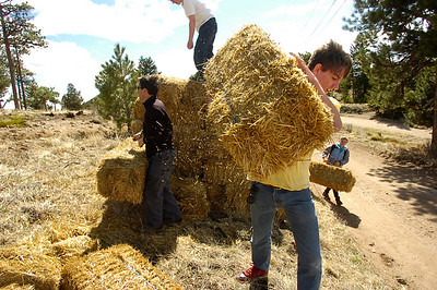 Jeffrey Harvey, a student at the Watershed School, carries straw bales to be placed on top of reseeded areas as part of  a 3 day project by the school to reseed areas of the Fourmile Fire burn area in the Sugarloaf Mountain Area. For more photos and a video of the project go to www.dailycamera.com Photo by Paul Aiken / The Camera / April 19, 2011