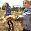 "Tobiah Nagle, left, and  Sydney Kinsey,  students of the Watershed School, spread straw over a reseeded hillside on a 3 day project by the school to reseed areas of the Fourmile Fire burn area in the Sugarloaf Mountain Area. For more photos and a video of the project go to  <a href=""http://www.dailycamera.com"">http://www.dailycamera.com</a><br /> Photo by Paul Aiken / The Camera / April 19, 2011"