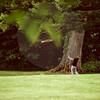 Aniko Towers Golf Photos Vale Resort HR-1228