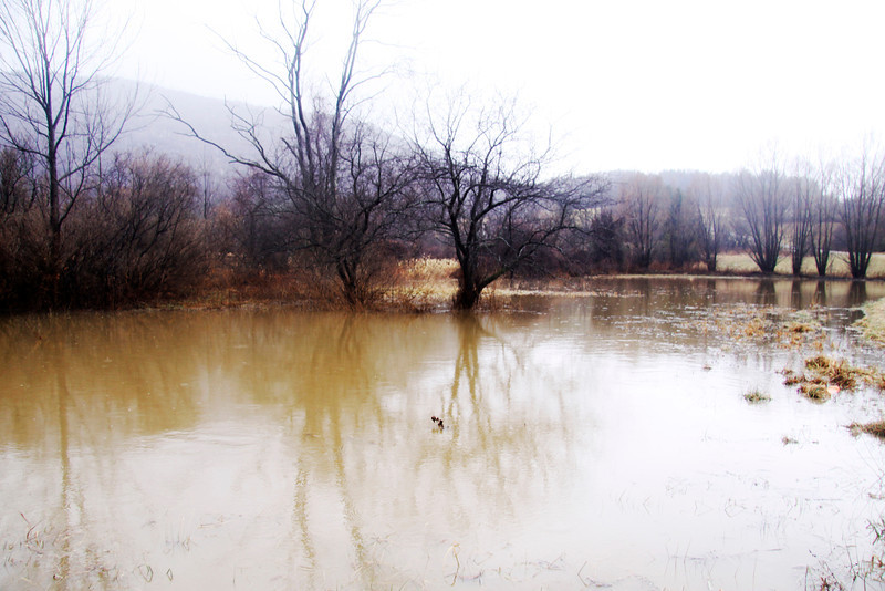 Rain and warm temperatures cause flooding in Williamstownon Monday afternoon.(January 6th 2014 Holly Pelczynski/Berkshire Eagle Staff)