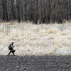 A turkey hunter walks through a field with his decoys Saturday near Mankato. Photo by Pat Christman