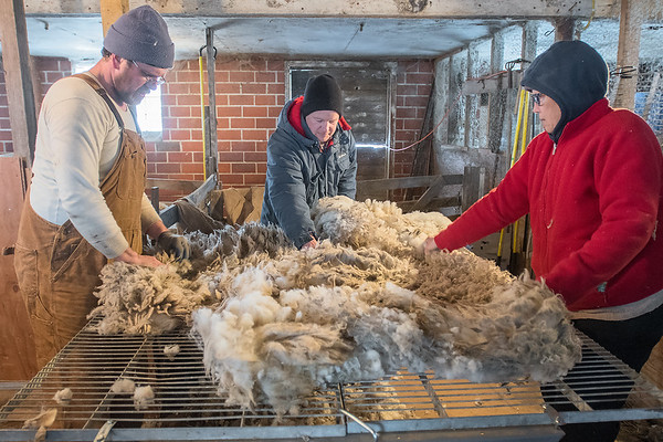 From left, Joe Domeier, Bo Ernst and Pam Becker sort through wool sheared off of a sheep by Domeier in rural Nicollet. Domeier said that he has 30 ewes and he sells the males for meat to local customers and to Schmidt's meat market. Photo by Jackson Forderer
