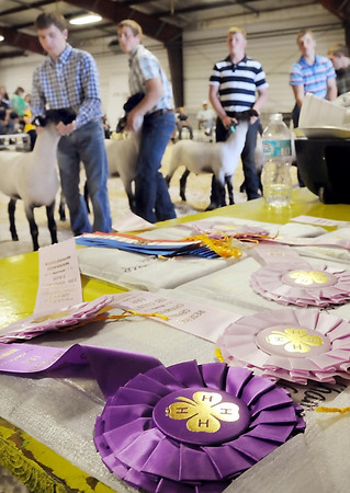 John Cross<br /> Ribbons await winners as 4-H youth show off their prize sheep during the Tri-County Fair in Mankato on Wednesday. The annual event culiminated in an auction for the prize livestock.