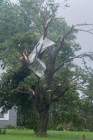 Debris from a farm building was blown into a tree at a farm residence in rural New Sweden Township after a tornado struck the area. Photo by Jackson Forderer