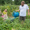 "Ryan Ehler (right) and McKenna Ehler, 5, water their plot of vegetables at the Good Counsel community garden on Tuesday. Ryan said they are growing borage, soy beans, pumpkins, brussel sprouts and different kinds of peppers. ""You can tell that we have pumpkin because there's a pumpkin right there,"" McKenna said as she pointed to a small orange pumpkin growing in the plot. Photo by Jackson Forderer"