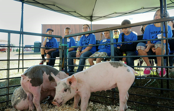 Youngsters participating in a Farm Camp at Farmamerica on Tuesday get a an up-close look at where their bacon comes from. Photo by John Cross