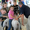 Ava Stading has her lamb judged by Bill Arthur at the Blue Earth County Fair Thursday. The fair runs through Saturday. Photo by Pat Christman