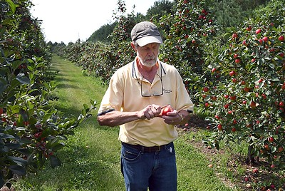 Montgomery apple orchard 1