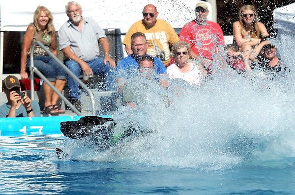 Pat Christman <br /> Fire, a black labrador retriever makes a big splash as he hits the pool during the Dock Dogs big air competition Friday at the Brown County Fair in New Ulm.