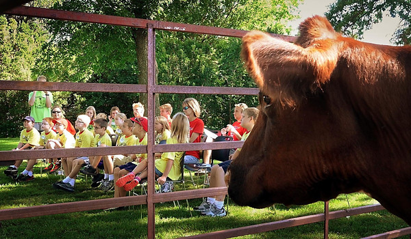 John Cross<br /> Youngsters attending Farm Camp Minnesota listen to a presentation on raising beef as a star attraction looks on at Farm America on Monday. Nearly 300 children were expected to participate in the annual event.