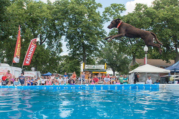 Thunder, a brown lab, jumps into the pool during the Dock Dogs speed retrieve competition at the Brown County Fair in New Ulm. Photo by Jackson Forderer