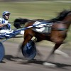 Harness racing 6