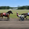 Harness racing 2