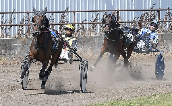 Harness racing 4