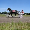 Harness racing 5