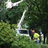 Fallen tree knocks out power in North Mankato