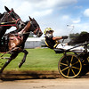 Harness Race 0811