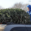Pat Christman<br /> Silas Harff, 7, helps his father Peter (not pictured) tie a Christmas tree to the top of his family's minivan after picking one out at the Y's Club tree lot on Madison Avenue Saturday.