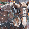 A horse owned by Jerry and Pat Buse leans into its companion as heavy snow fell during Bells on Belgrade held in North Mankato. Photo by Jackson Forderer