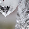 A drop of water falls from an ice sculptor of the Grinch made by Adam Scholljegerdes on Saturday. The four ice sculpting teams at Kiwanis Holiday Lights ran into some minor obstacles due to the warmer temperatures. One team's ice sank into the ground and had to be propped upright. Photo by Jackson Forderer